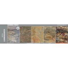 TRANSLUCENT MYCA